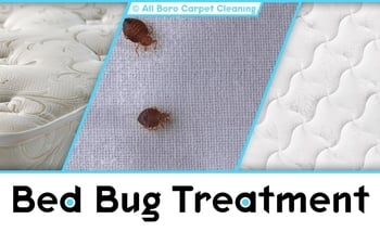 Bed Bug Treatment - Manhattan
