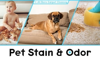 Pet Stain and Odor Removal - Manhattan